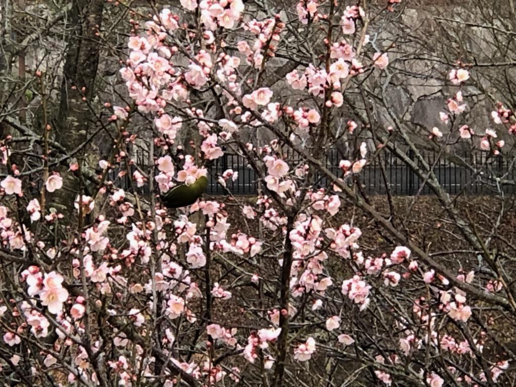 春はそこまで✿